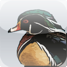 An iPhone App for management and visualization of bird sightings.